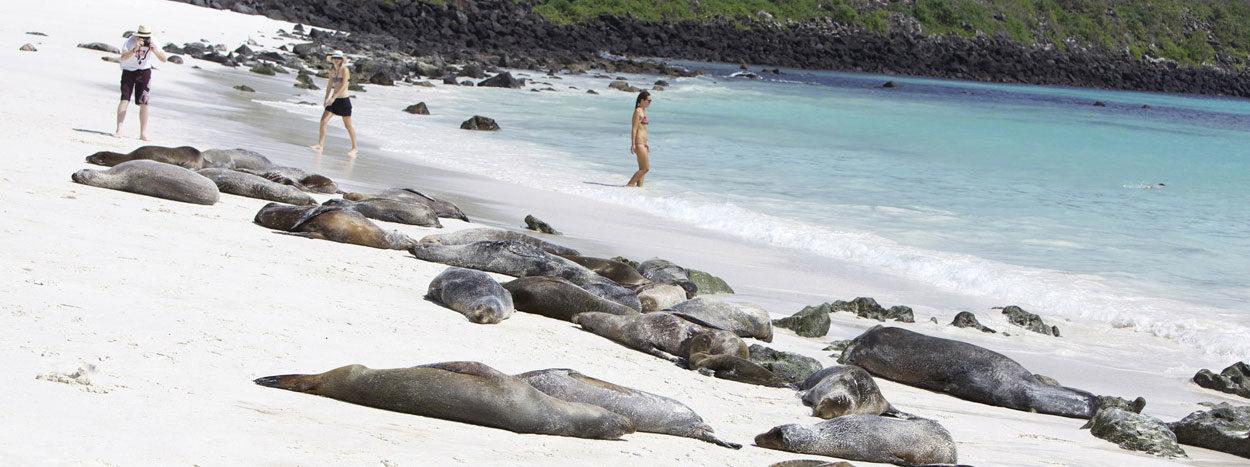 https://www.inkareisen.de/wp-content/uploads/2014/11/galapagos-strand-1-1250x467.jpg