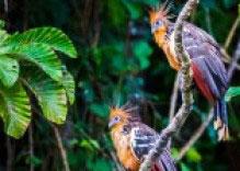 TAMBOPATA NATURRESERVAT – INKATERRA RESERVA AMAZÓNICA